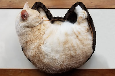 2 in 1 Cat Scratching Pad and Lounge Bed