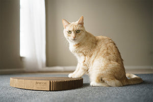 Cat on Americat scratching board