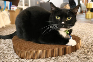 Black and white cat sitting on Americat cat scratching board