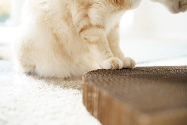 Cat paws on cat scratching board