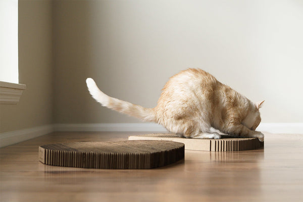 Orange cat scratching Americat scratching pad