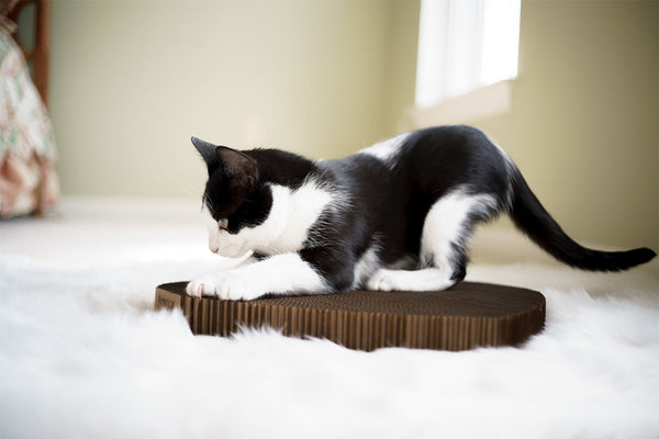 Black and white cat scratching scratching pad