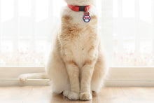 Load image into Gallery viewer, Cat wearing Americat cat ID tag