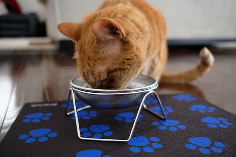Orange cat eating from elevated cat bowl stand