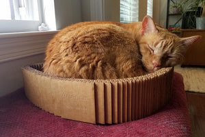 Cat sleeping in scratcher bed