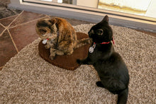 Load image into Gallery viewer, 2 cats fighting over Americat cat scratcher