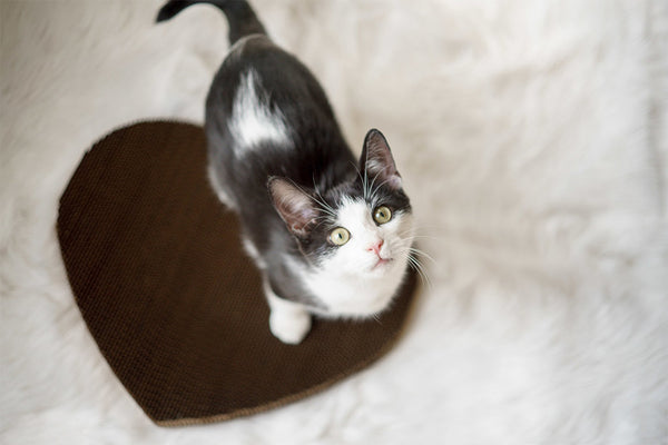 Black and white cat standing on heart shaped cat scratching pad
