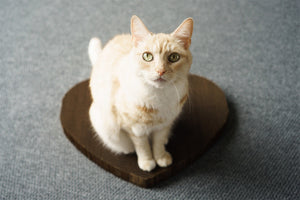 Orange cat sitting on heart shaped cat scratching pad