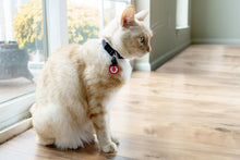 Load image into Gallery viewer, Cat wearing Americat medical alert cat ID tag
