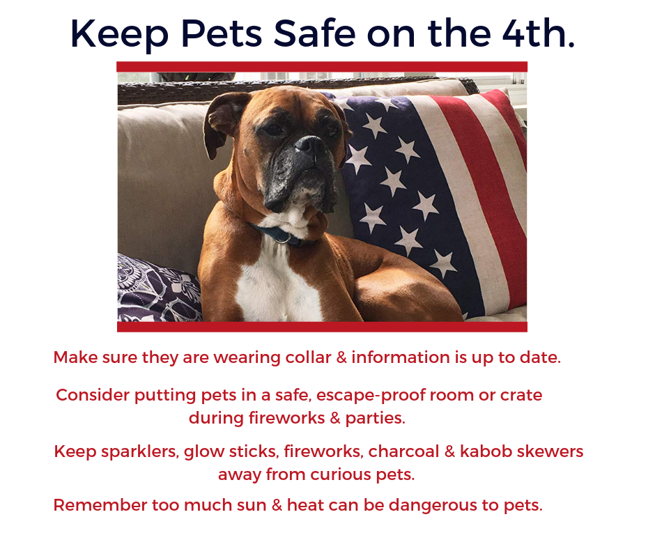 Protein Essentials Pet Safety Tips for 4th of July