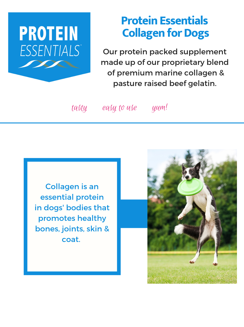Protein Essentials Collagen for Dogs