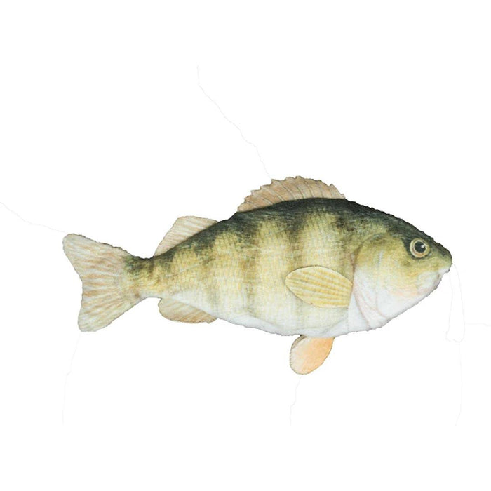 Freshwater Fish Yellow Perch with Rope