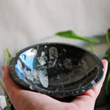 Orthoceras Fossil Trinket Bowl - Small