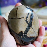 Septarian Nodule - Dragon Stone