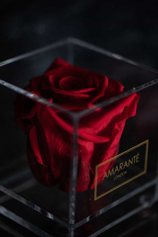 Single Forever Red Rose in acrylic box