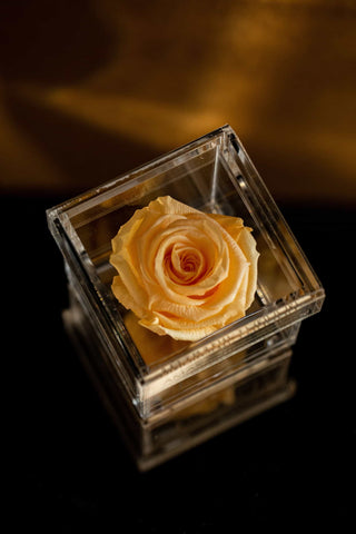 same-day Flowers - Yello Forever Rose in acrylic box