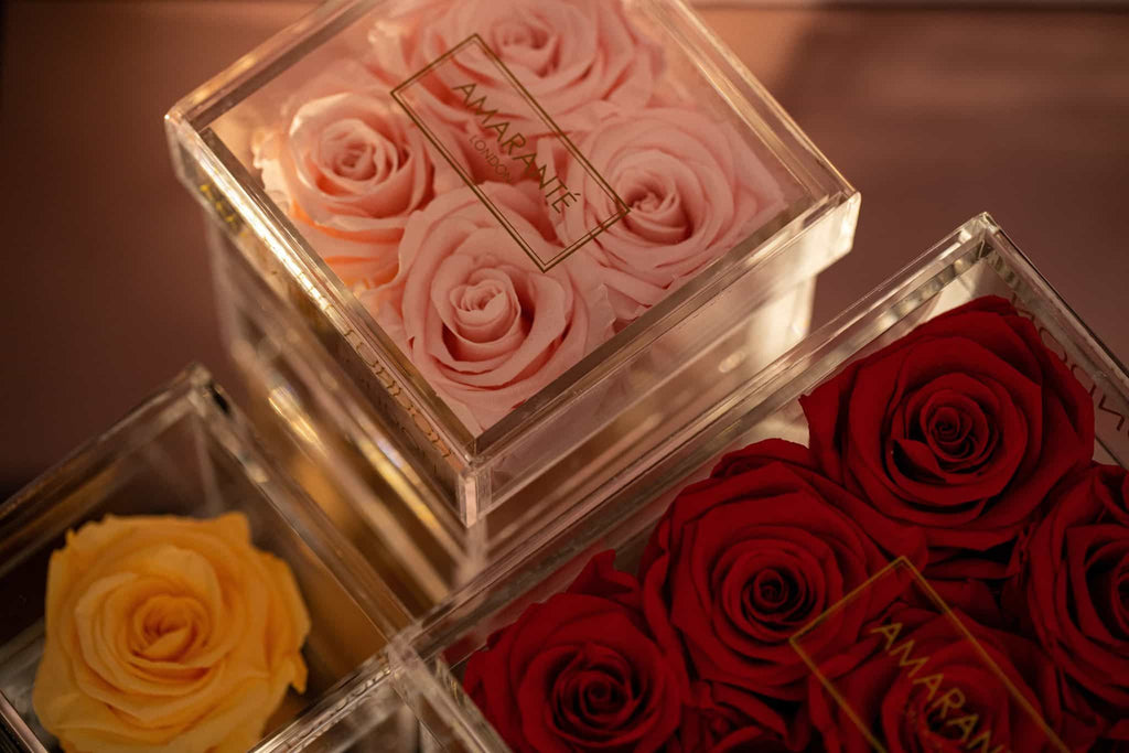 Amaranté London Forever Roses in a in jewelry box
