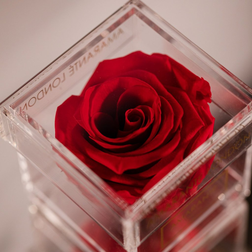 Amaranté London Red Forever Roses in acrylic Jewellry Box