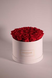 Infinity roses: bright red