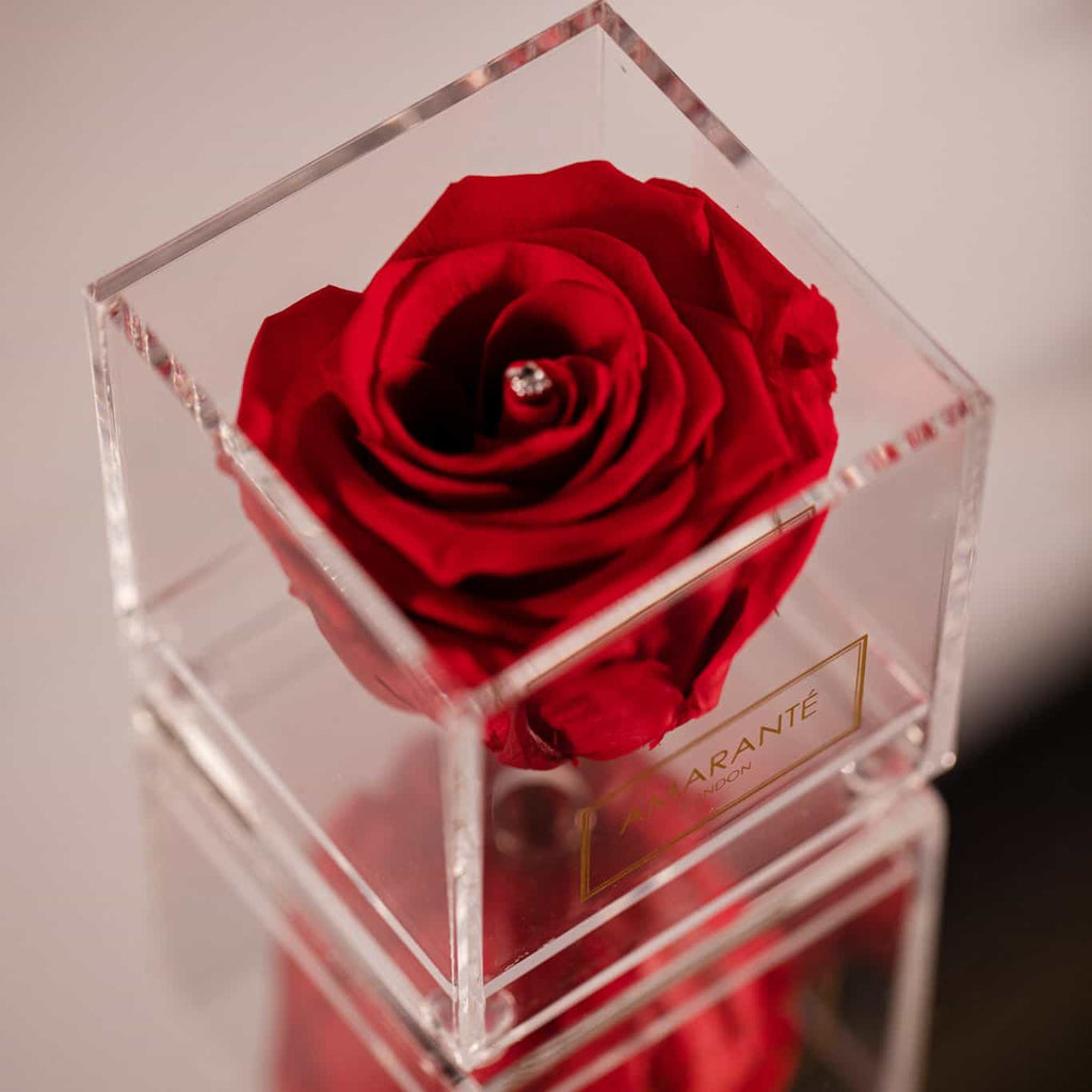 Red single rose in a jewellery box