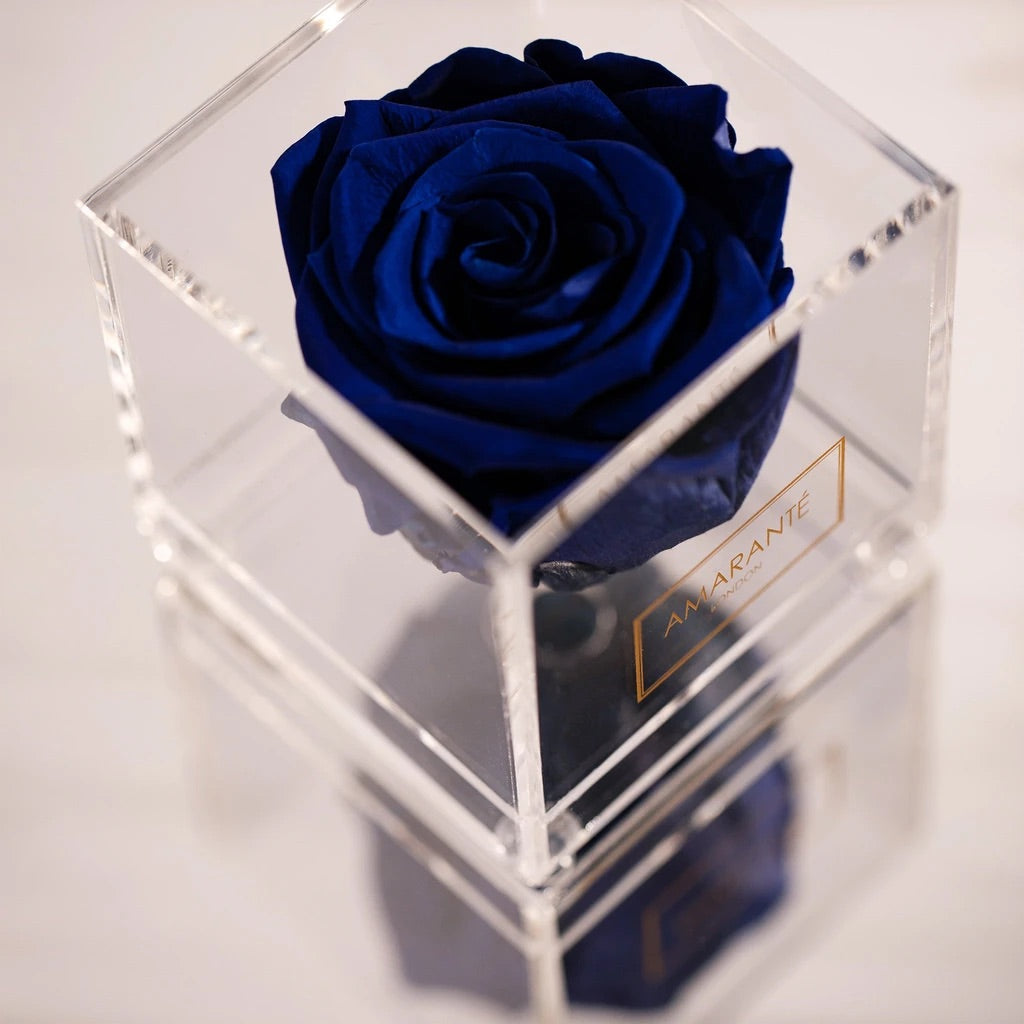 Single Blue Long Lasting Infinity rose a box box