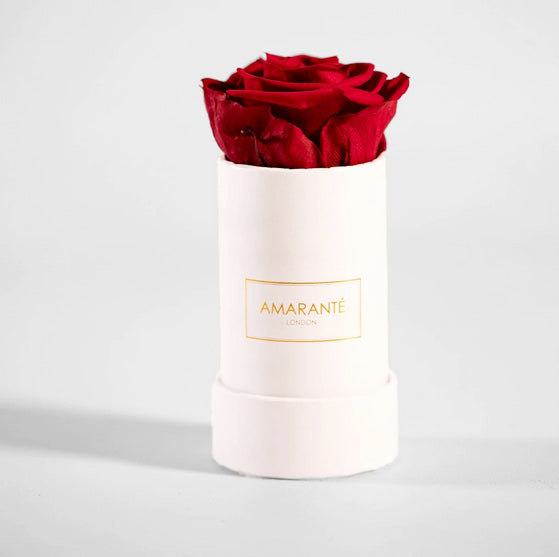 Single Eternal Rose in white round box