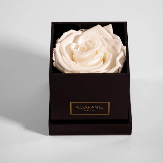 White preserved rose in black acrylic gift box