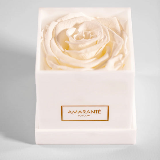 White eternal rose in acrylic gift box