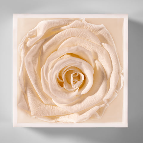 Acrylic White Infinity Rose Box