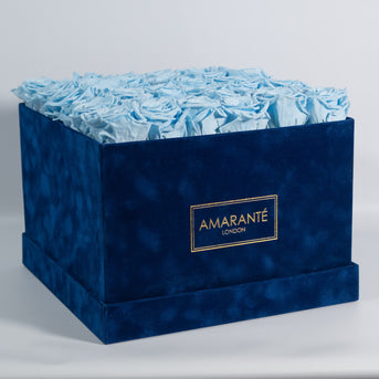 Light blue roses in extra-large rose box