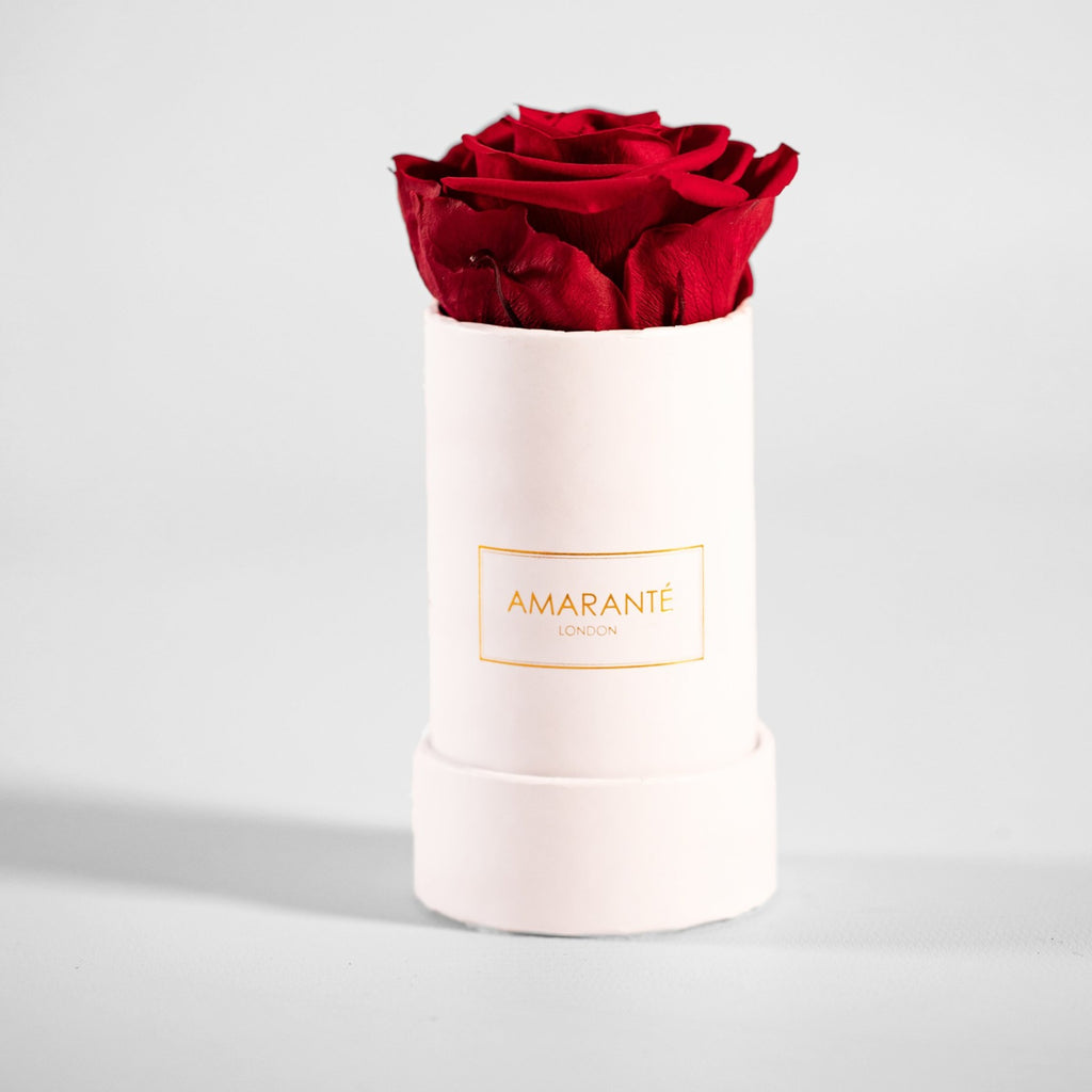 Sole Infinity Rose - White Box