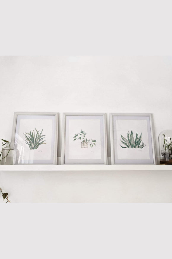 Botanical hand painted water color prints.  Casey Snyder