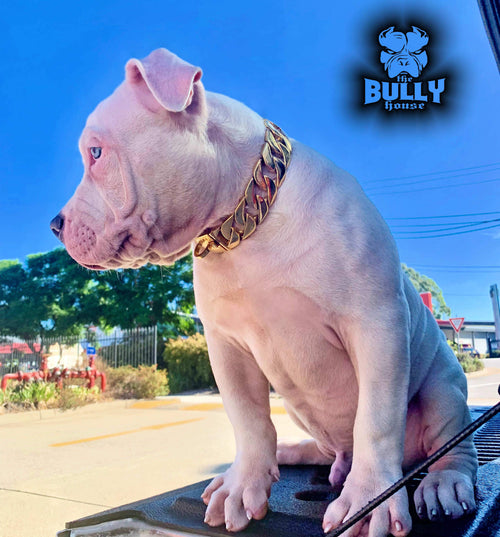DOG CHAINS / LEASHES – THE BULLY HOUSE