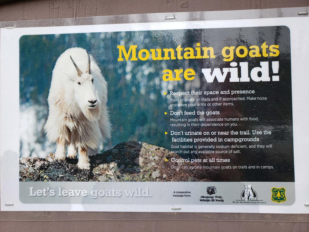 RMGA Fights for Respectful Goat Encounters