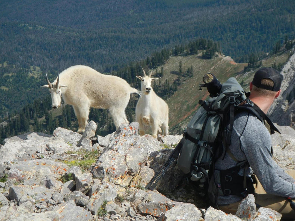 What you should know while recreating in goat country - MT FWP