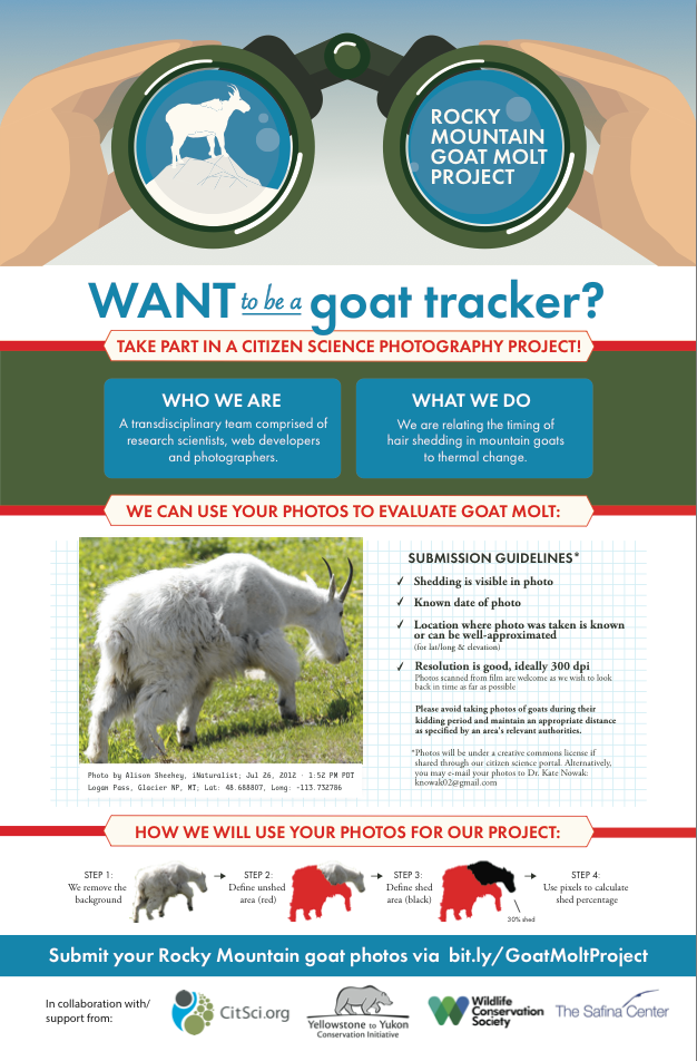 Rocky Mountain Goat Molt Project