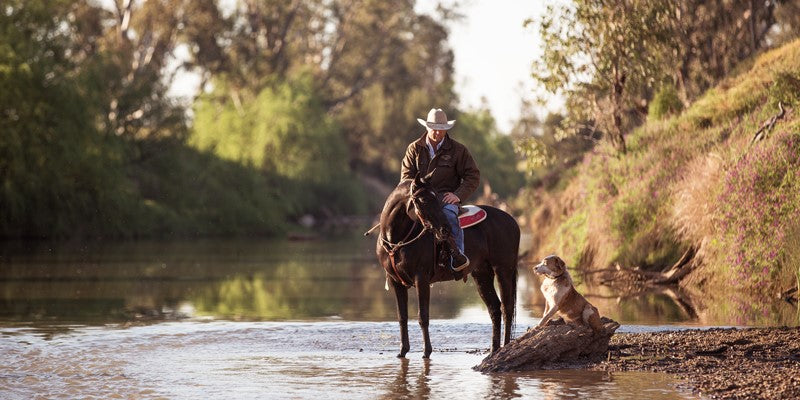 Troy Palmer droving on the Namoi River with his stallion Impressive Destiny and dog Riley