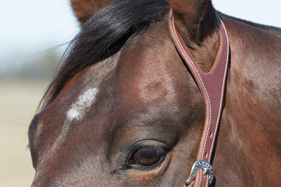 One Ear Bridle - Fitted