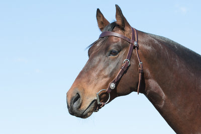 Angus Barrett's Sure Fit Shaped Brow Bridle