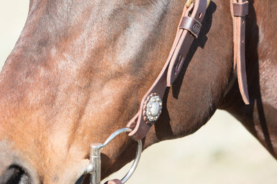 Angus Barrett's Sure Fit Shaped Brow Bridle has stunning berry conchos