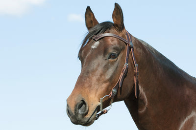Angus Barrett Sure Fit La Pin Bridle features a beautiful shaped brow and black accented hardware