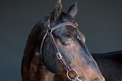 Station Bridle - Fully Stitched - Dark Natural