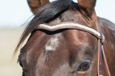 Angus Barrett Tassa Bridle with Braided Brow in Rawhide