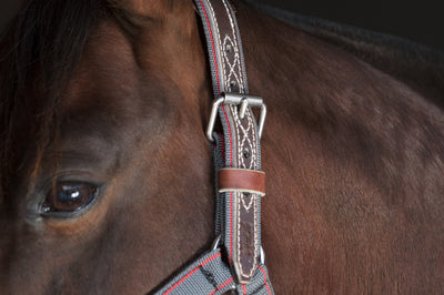 Angus Barrett Tie Up Halter is fully stitched around the buckle holes for extra strength and durability