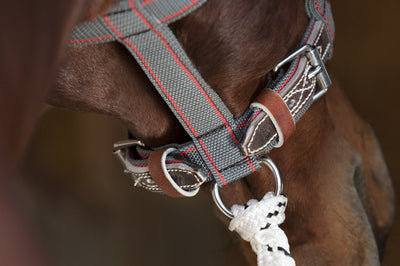 Angus Barrett Tie Up Halter features two buckles on the nose band for even adjustment, so that the halter can be used on different size horses from a young horse through to a stallion.