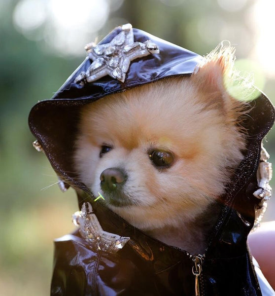 dog volpino pomeranian dog jacket coat