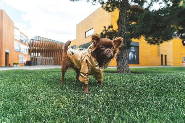 chihuahua toy wear coat designer
