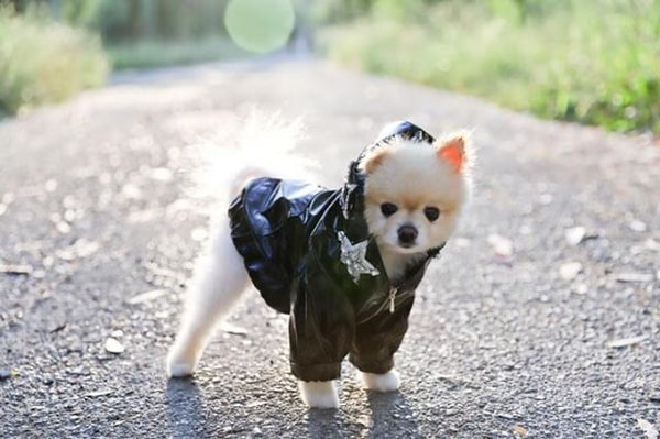 pomeranian volpino jacket coat for dog