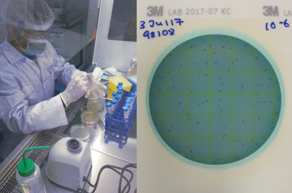 Microbiology Laboratory Testing Services