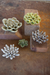 Set of Five | Greys & Greens Ceramic Succulents
